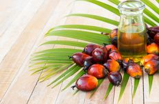 Palm oil / Palm fat